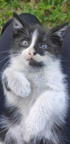 PILNE!! Koty na oddanie