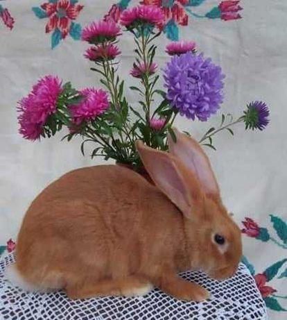 Кролики Кролики Кролики