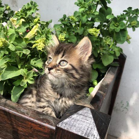 Котик безкоштовно