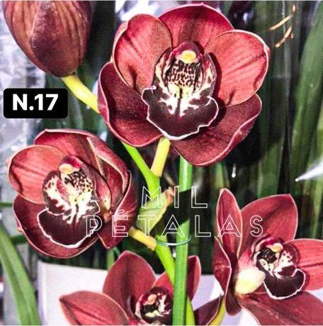 Orquideas coleçao com 3/4 bolbos