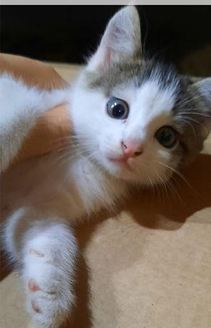 Добрый котёнок ищет дом