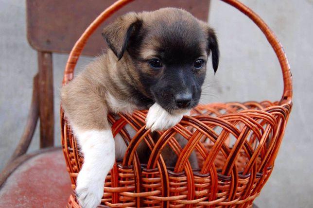 Щенок девочка , в добрые ручки , собака