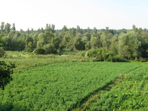 Земельна ділянка з будинком, с.Станіславчик