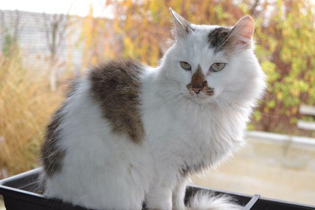 Пушистый кот Шурик
