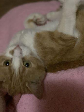 Кошечка 10 месяцев