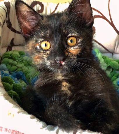 Прекрасный котенок Софочка 3 мес в дар!