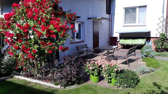 Domek w ogrodzie do wynajęcia