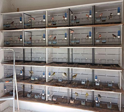 Material ornitológico viveiros e gaiolas