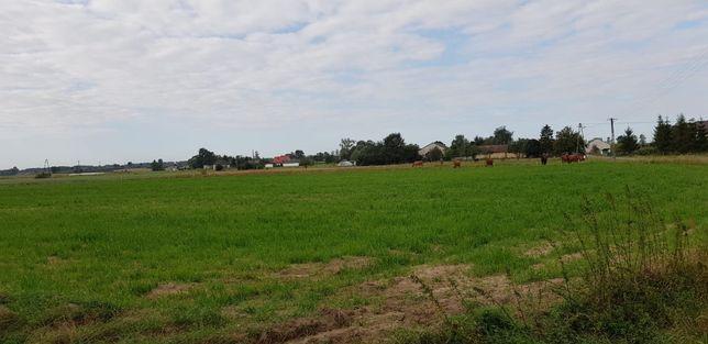 Ziemia rolna- Ojrzanów