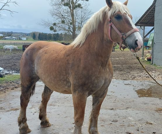 Konie , koniki , klacze