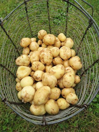 Ziemniaki świeże