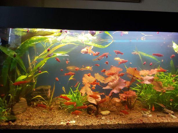 Аквариумистика аквариумная рыба