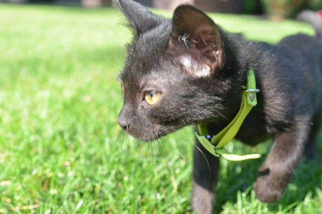 Черная кошечка, котенок, девочка в хорошие руки