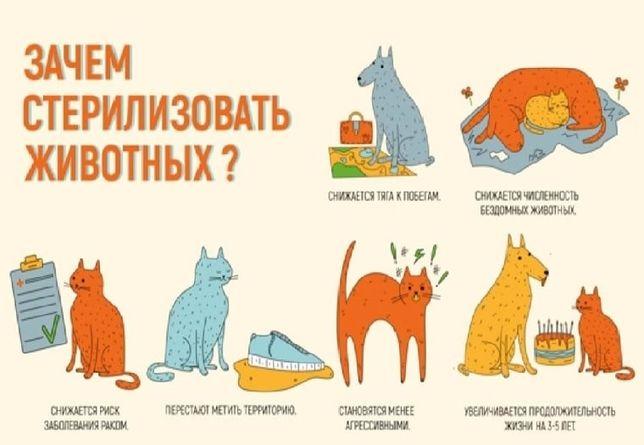 Профессиональная кастрация кота, стерилизация кошки (в операционной)