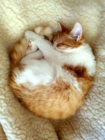 Кошка  Рыжая морда.