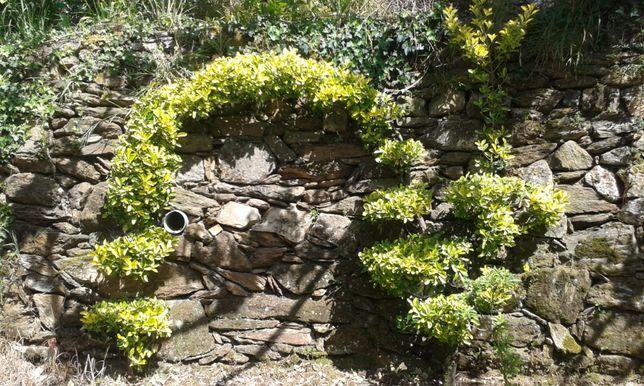 Arcos Com planta evominus.
