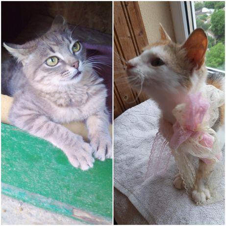 Лучшие котята в добрые руки!)