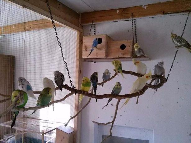 Fa li ste papugi