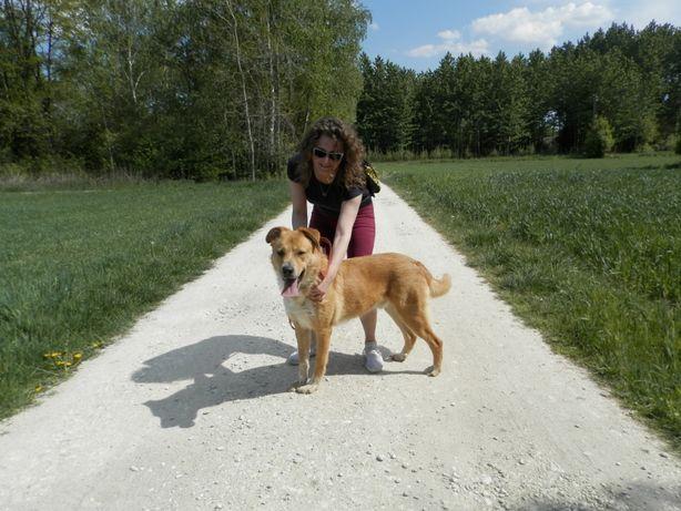 Hamis - duży , energiczny pies