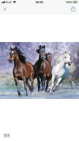 Plakat z końmi, 100x140cm