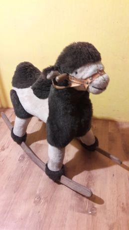 Koń, konik, wielbłąd na biegunach
