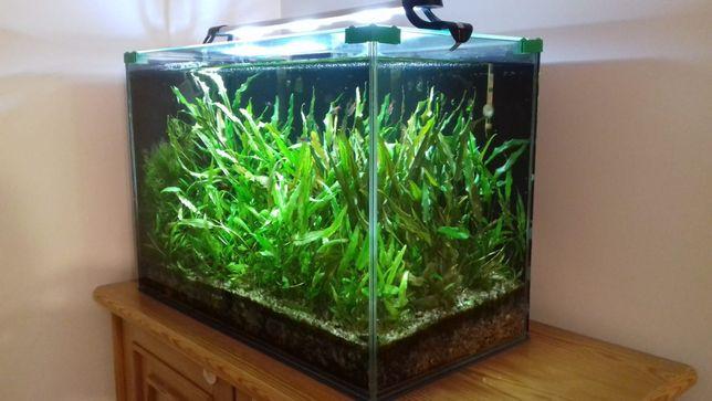 Akwarium 72 l z dodatkowym wyposażeniem i akcesoriami