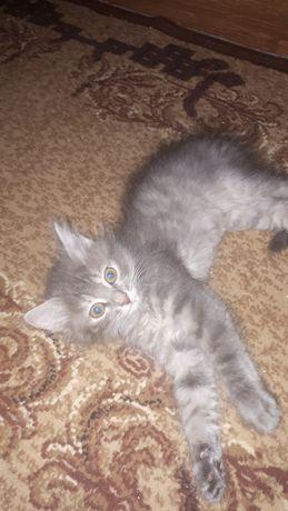 Отдам котят 2.5 месяца