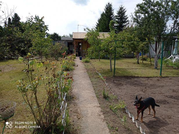 Działka rekreacyjno ogrodnicza z domkiem