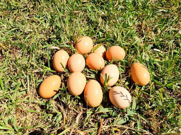 Ovos de galinha Biológicos e deliciosos da quinta