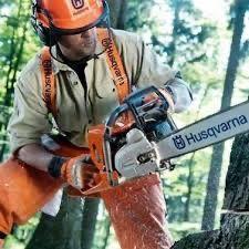 Профессиональный спил деревьев, оценка Бесплатная!!