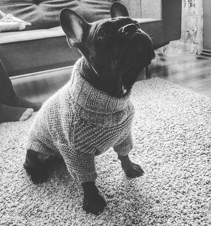 Sweterek dla pieska buldog francuski