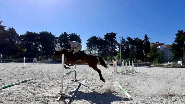 Cavalo de desporto polivalente