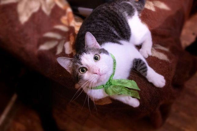 Котик мальчик в добрые руки, котята бесплатно, киев