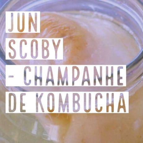Cultura de Jun Biológica - scoby probiótico champanhe de Kombucha
