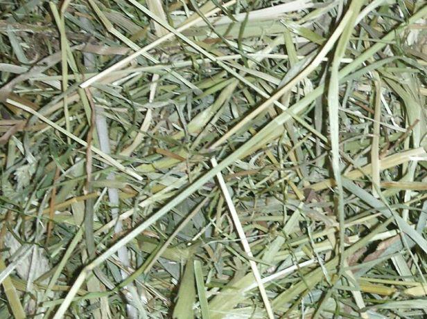Siano sianko łąkowe dla gryzoni królik świnka morska - 400g, 1500g