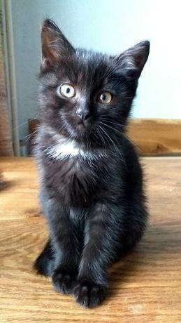 Котенок котята бесплатно