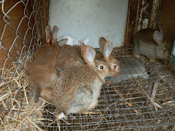 Кролики помесь продам.