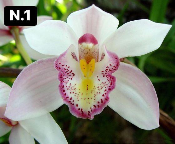 Orquídeas 4-20€