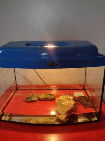 Żółw chiński razem z akwarium