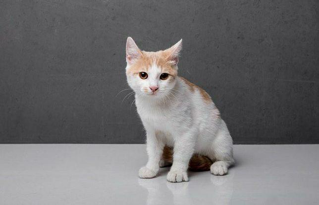 Отдам рыже-белого котёнка, мальчик,  3 месяца