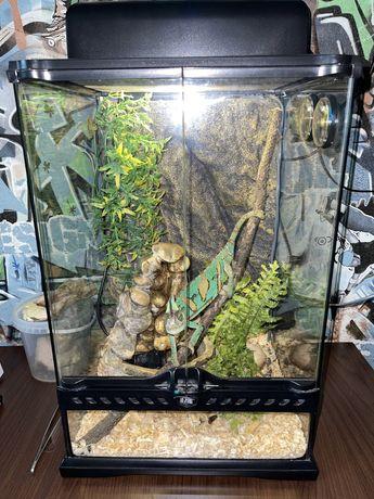 Продам хамелеона с террариумом