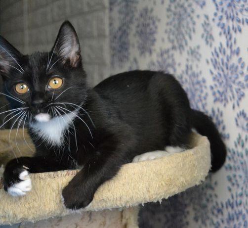 десятимісячне кошенятока дівчатко з білими вусами