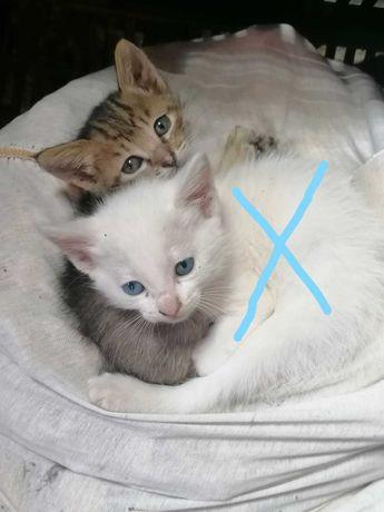 Gatinhos para adoção  responsável 3 meses