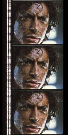 Fotogramas em película 35mm do filme culto THE FLY (A MOSCA)