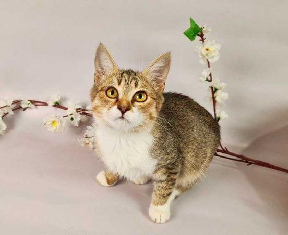 Кошеня Жасміна 3 місяці кішка кицька киця котя