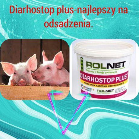 Diarhostop Plus-mieszanka uzupełniająca na biegunki u prosiąt.