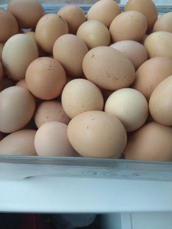 Продам яйця домашні