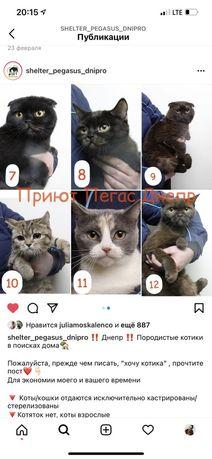 Котики кошки