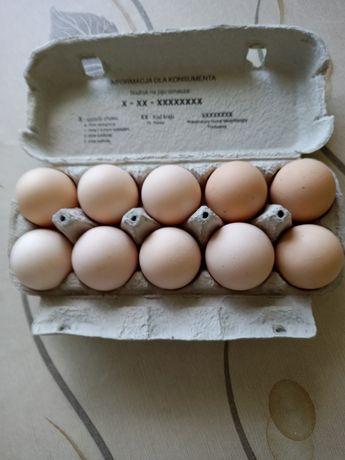 Jajka wiejskie sprzedam