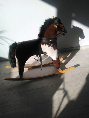 Koń na biegunach- rży